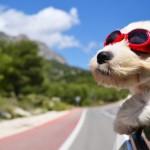 Vacanze in auto con il cane: consigli per un viaggio sicuro